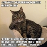 Cat and Brexit