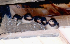 Our first brood